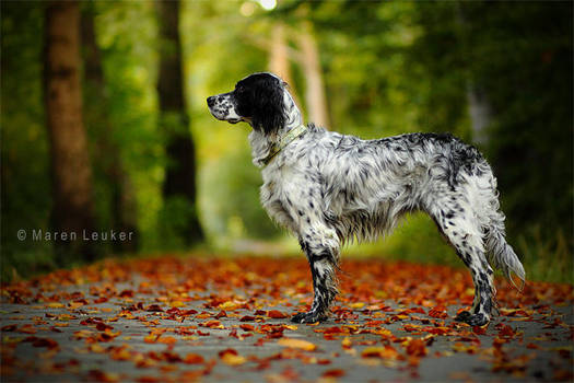 fall... by Maaira