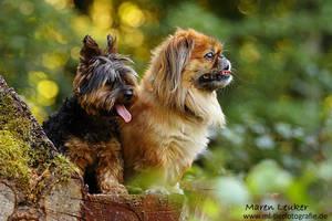 .dogs. by Maaira