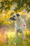 autumn beauty by Maaira