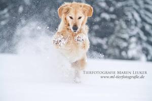 snow dust by Maaira