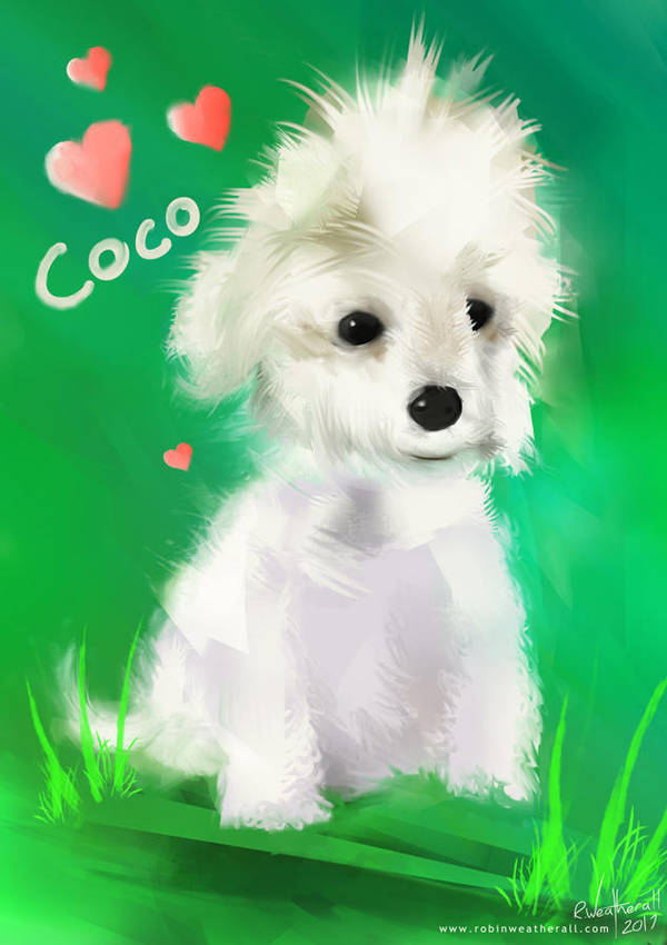 Coco by robinweatherall