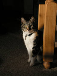 My best friends cats 1 by Mariks-Stock