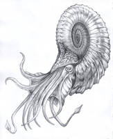 Nautiloid by Parsons