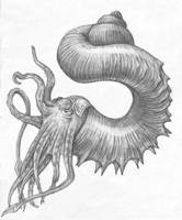 Nautiloid 2 by Parsons