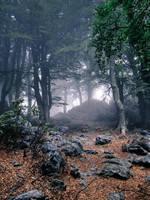 Enter the wood by WTek79