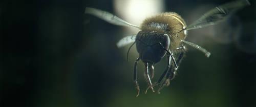 Bee - Slow Motion by Ramteen