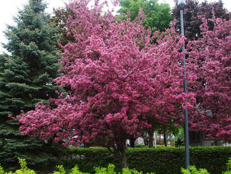 Summer Lila tree by JM-DG