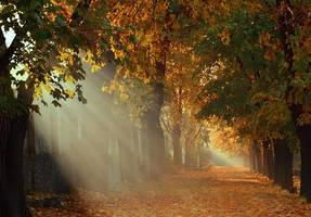 autumn morning 18 by alexandrdeviant
