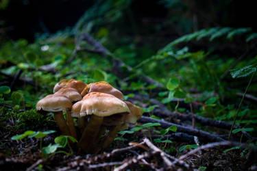 Mushrooms 05 by Miingno