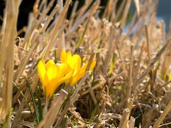 Spring Awakening 01 by Miingno