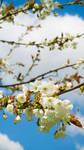 Spring Awakening 04 by Miingno