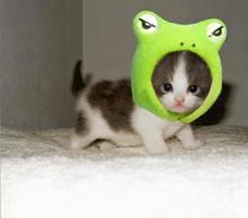 cute kittyyy by ishu11