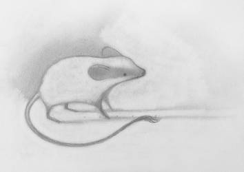 Mouse, Still by SethFitts