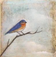 Resting Blue Bird by SethFitts