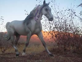 Stallion at Sunset by MisteyBabe