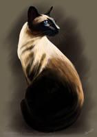 Siamese by Martith