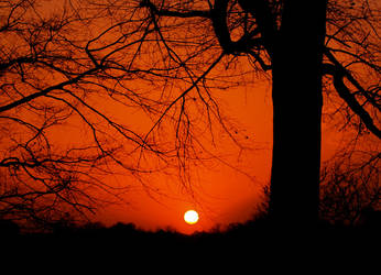 Scarlet Sky by alimuse