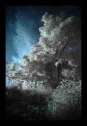 Heart of Darkness by Sheogorath8
