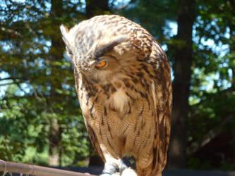 Owl II by HimeRikkina