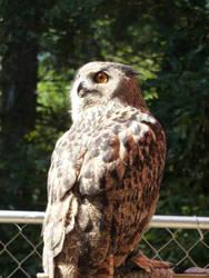 Owl IV by HimeRikkina