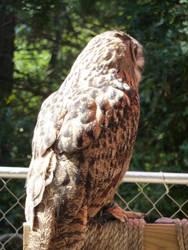 Owl V by HimeRikkina