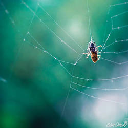 Spider's Web by venicequeenf
