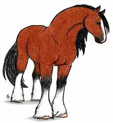 Clydesdale Horse by WildSpiritWolf