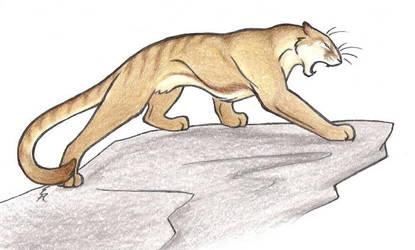Felidae by WildSpiritWolf