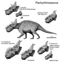 Pachyrhinosaurus by cisiopurple