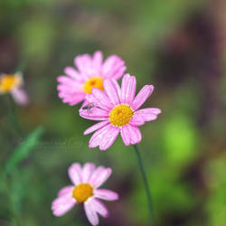 Pretty in pink by FurImmerUndEwig
