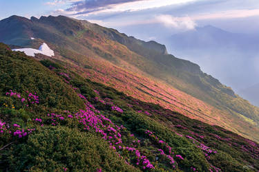 Spring colors by trekking-triP