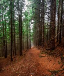 Autumn by trekking-triP