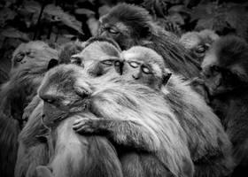 Monkey6 by tpphotography