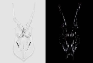 black bone, white bone by TheManface
