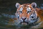 I love to take a bath by NB-Photo