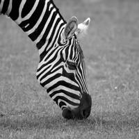 Stripes, no stars by NB-Photo