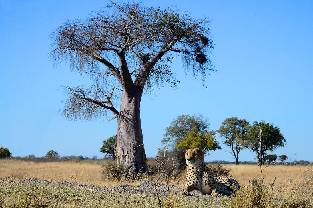Two African icons by NB-Photo