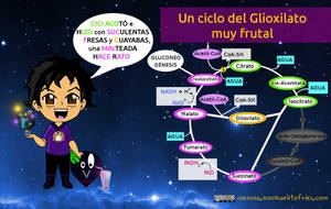 Ciclo del glioxilato by Mochuelitofriki