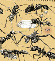Ant sketching2 by inubiko