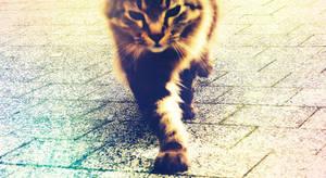 Predator cat - 1 April Fella by free-way-of-life