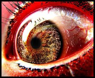 Eye serie 41 by MelckyXY