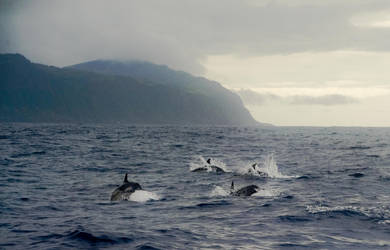 Dolphins by joe279