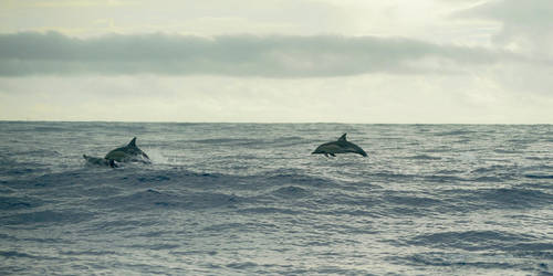 Ocean and Dolphins by joe279
