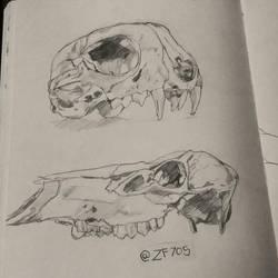 Animal Skulls by zf705
