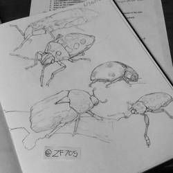Bugs by zf705