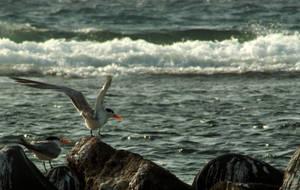 birds chillin' 1 by BobTass