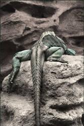 Lazy Lizard by er0k