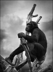 Primate by er0k
