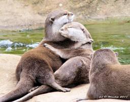 Otter hugs by Vitaloverdose