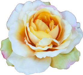 Rose #3 by melinahollway